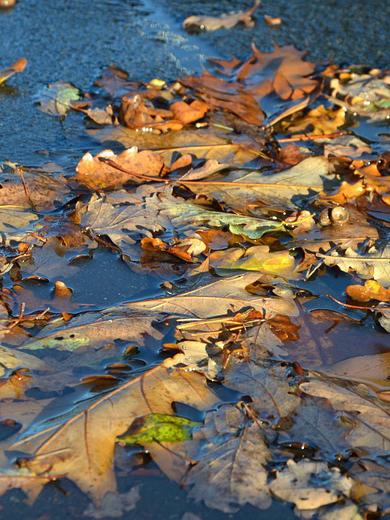 autunno-523698_960_720-defin